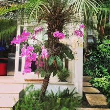 89 best orchid display ideas images on pinterest vertical