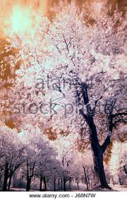 invisible infrared landscape scenery countryside nature tree park