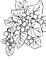 coloring coloring pages plants