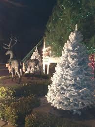 deerbrooke farm photo gallery premium christmas tree lot in las
