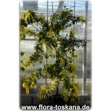 Tropische Pflanzen Im Garten Exotische Pflanzen In Großen Grössen Xxl Bestellen Flora