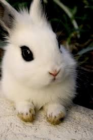 163 best bunnies images on pinterest bunny rabbits animals and