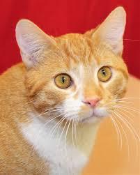 cats for adoption u2014 c a r e