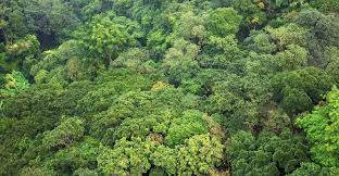 Plants That Grow In Tropical Rainforests New Paper Raises Question Of Tropical Forest Carbon Storage
