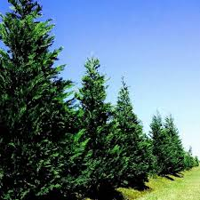 greene acres tree farm home facebook