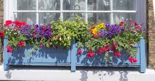 Wooden Window Flower Boxes - why when and how to use flower and window box liners or inserts