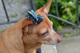 bows for tulle boutique dog bow tutorial for small dogs bowdabra