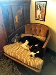 Sleeping In A Chair 100 Best Lexie Images On Pinterest English Springer Spaniels