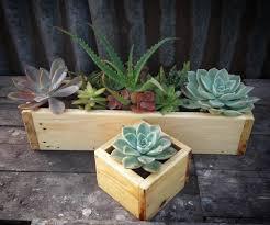 11 space saving ways to display houseplants amrank real estate