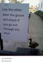 Goose Meme - dopl3r com memes use the other door the goose will attack if you