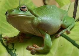 frogs pet city wa