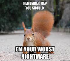 Squirrel Meme - remember me you should i m your worst nightmare squirrel