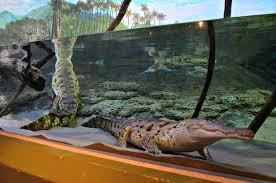 Aquarium For Home by Sea Turtle U2013 Adventure Insider