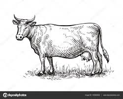 hand drawn cow sketch vector illustration u2014 stock vector