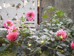 Family Garden Inn Jasmine Garden Inn Ella Sri Lanka Booking Com