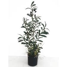 faux olive tree wayfair