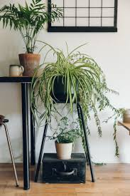 1551 best indoor gardens images on pinterest plants houseplants
