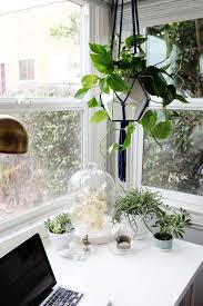 Small Desk Plants by 204 Best Plants Greenery Images On Pinterest Plants Gardening