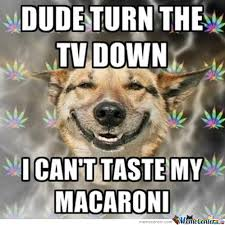 Funny Memes About Weed - marijuana dog memes best collection of funny marijuana dog pictures