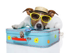 traveling with pets images Traveling pets trip jaunt trip jaunt jpg