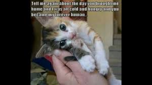 Cute Kitty Memes - cutest cats and mostly kittens slideshow youtube