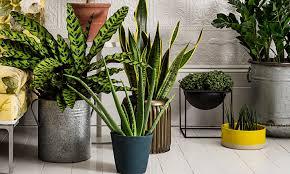 feng shui bedroom plants 40 best feng shui plante images on