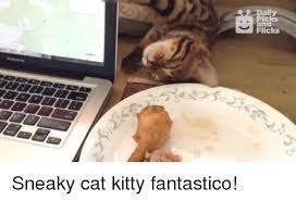 Sneaky Cat Meme - daily picks and flicks sneaky cat kitty fantastico kitties meme