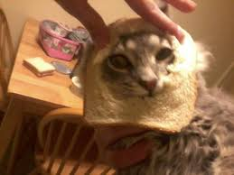Cat In Bread Meme - the barista cat the bread meme