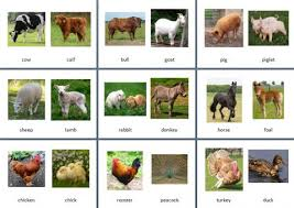 theme farm animals theme cards juf milou
