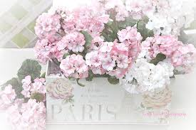 shabby chic flowers shabby chic flower photography pink white summer garden