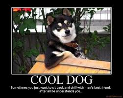 Cool Dog Meme - image 43222 cool dog know your meme