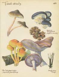 mushrooms print vintage botanical print toadstools autumn decor