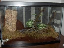 my grey tree frog pics setup 56k warning arachnoboards