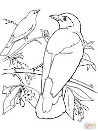 amazing free printable bluebird bird coloring books printable for