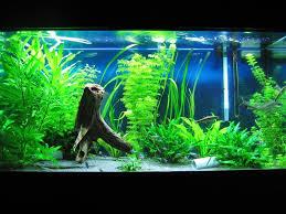 aquarium decoration ideas freshwater freshwater aquarium design ideas houzz design ideas rogersville us