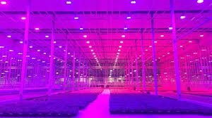 commercial led grow lights greenhouse propagation under lumigrow led grow lights projects to