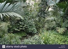 Florida vegetaion images Usa florida miami old cutler road fairchild tropical garden jpg