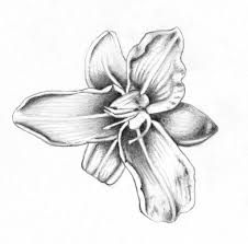 best pencil sketches of flowers drawing art library