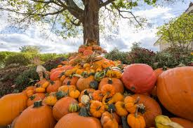 thanksgiving usa wiki perona farms nj wedding venue events catering sunday brunch