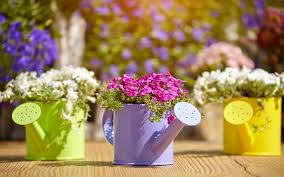 watering cans flowers decoration 4k wallpaper hd download