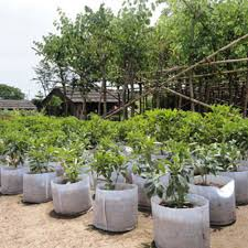 native plants for pots 100 flower pots for sale online best 2017 bluetooth smart