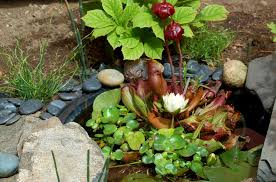 pond plants best choices for a small area