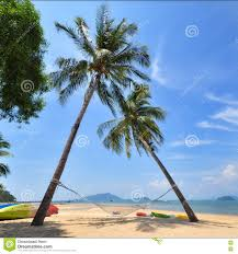 coconut palm trees with hammock and tropical beach background