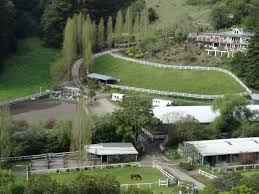 willow pond ranch