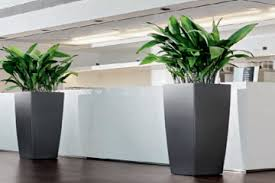 plant for office simply plants for stunning office plants plant displays across