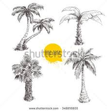 hand drawn palm trees sketch set stock vector 348850835 shutterstock
