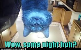 Drunk Cat Meme - lolcats drunk lol at funny cat memes funny cat pictures with