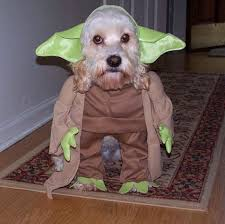 Chihuahua Halloween Costumes 30 Halloween Costumes Dogs Put Smile Face