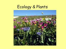 plants flowers and pollination powerpoint by bevevans22