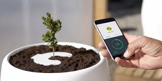 biodegradable urn bios incube urn turns you into a tree business insider
